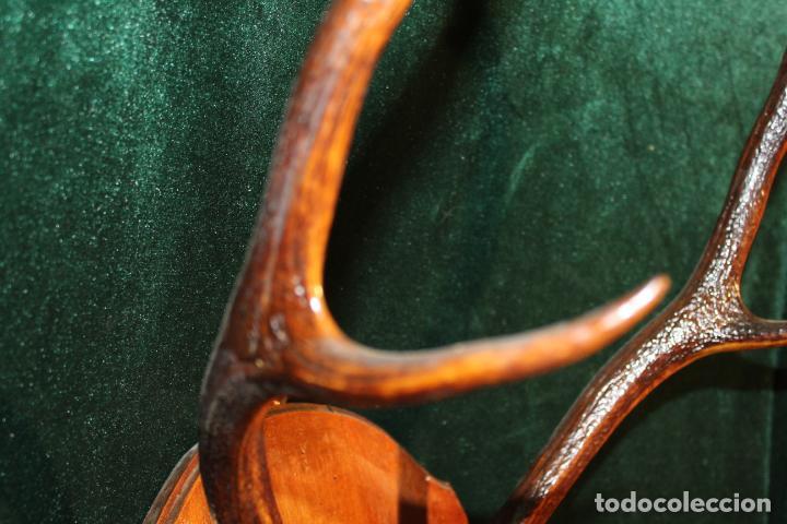 Antigüedades: TROFEO DE CAZA - Foto 8 - 142193186