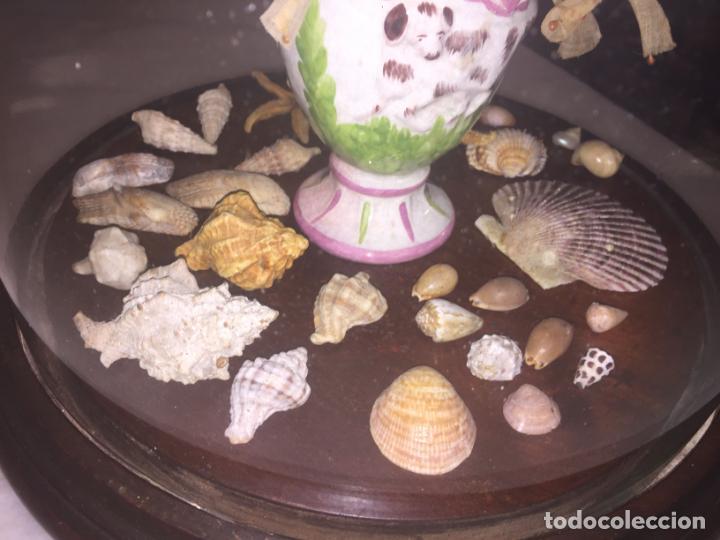 Antigüedades: Antiguo fanal de cristal soplado a mano Mallorquin peana y pomo flores de ropa isabelino siglo XIX - Foto 4 - 143041698
