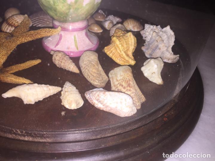 Antigüedades: Antiguo fanal de cristal soplado a mano Mallorquin peana y pomo flores de ropa isabelino siglo XIX - Foto 11 - 143041698