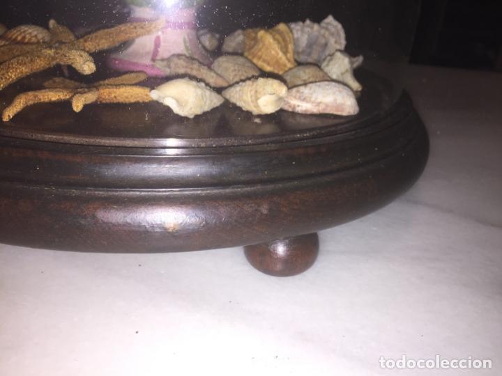 Antigüedades: Antiguo fanal de cristal soplado a mano Mallorquin peana y pomo flores de ropa isabelino siglo XIX - Foto 12 - 143041698