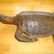 Antigüedades: ANTIGUA TORTUGA GRAN TAMAÑO CAREY ERETMOCHELYS IMBRICATA. TAXIDERMIA.TORTUGA GRAN TAMAÑO.. Lote 143044570