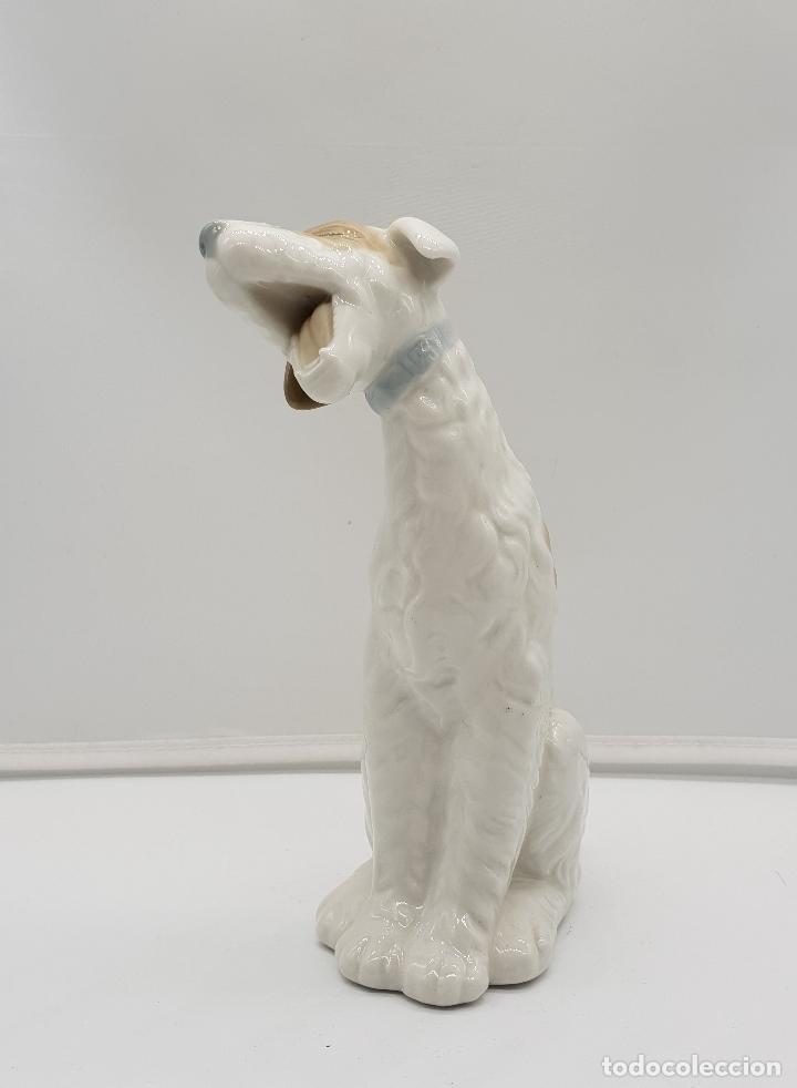 Antigüedades: Bella figura antigua de perro fox terrier bostezando en porcelana Nao By Lladro, sellada en la base - Foto 5 - 145796234