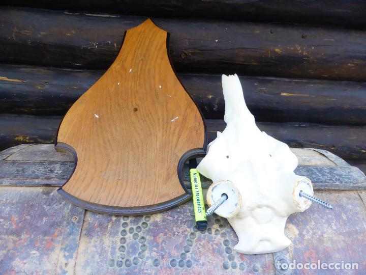 Antigüedades: Máscara para Taxidermia de Ciervo y tabla de roble - Foto 3 - 146424802