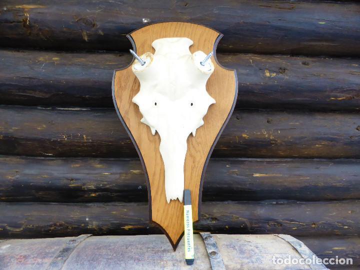 Antigüedades: Máscara para Taxidermia de Ciervo y tabla de roble - Foto 5 - 146424802