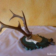 Antigüedades: CUERNA DE CORZO HUESO NUMERO 4. Lote 150428062