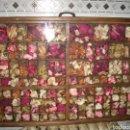 Antigüedades: GRAN VITRINA EXPOSITOR DE PLANTAS , 82 X 56 CM. Lote 152662757
