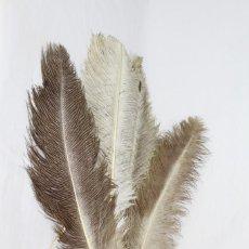 Antigüedades: REFB PLUMAS GRANDES ANTIGUAS DE MARABÚ 7 UNIDADES 65 CM. Lote 152875846