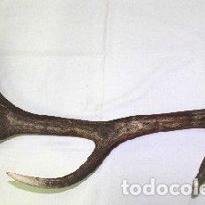 Antigüedades: DESMOGUE DE CUERNA DE CIERVO. TAXIDERMIA.. Lote 153047194