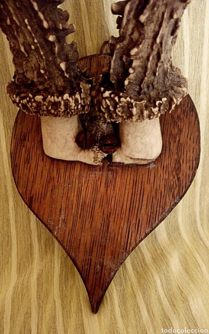 Antigüedades: Cornamenta de cervatillo. Muy antigua. Sobre base de madera. Vintage. - Foto 3 - 154652942