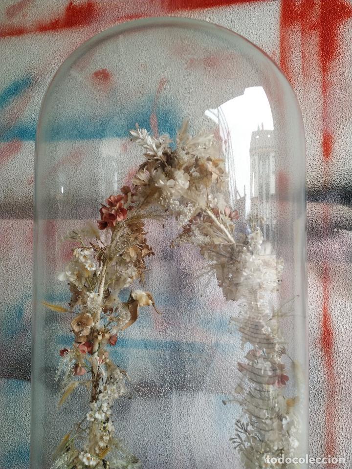 Antigüedades: Fanal de cristal antiguo sobre peana de madera. - Foto 3 - 155099374
