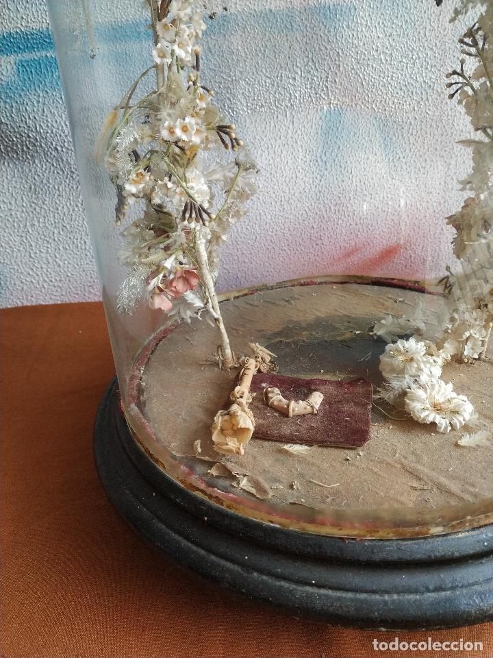 Antigüedades: Fanal de cristal antiguo sobre peana de madera. - Foto 5 - 155099374
