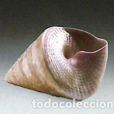 """Antigüedades: REF: 01005568 """"CARACOLA CÓNICA"""" LLADRÓ. Lote 155558154"""