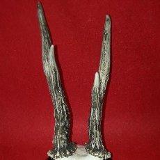 Antigüedades: TROFEO , CRANEO , CABEZA DE CORZO. Lote 155693830