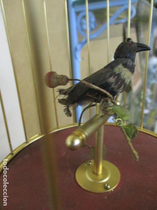 Antigüedades: Preciosa Jaula con Soporte de Bronce - Pájaro Colibrí, Autómata - Francia - Principios S. XX - Foto 13 - 156794682