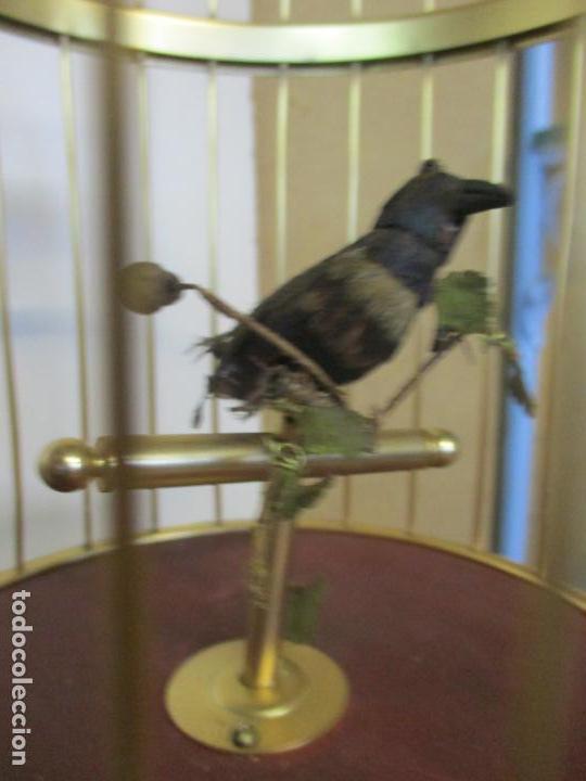 Antigüedades: Preciosa Jaula con Soporte de Bronce - Pájaro Colibrí, Autómata - Francia - Principios S. XX - Foto 15 - 156794682