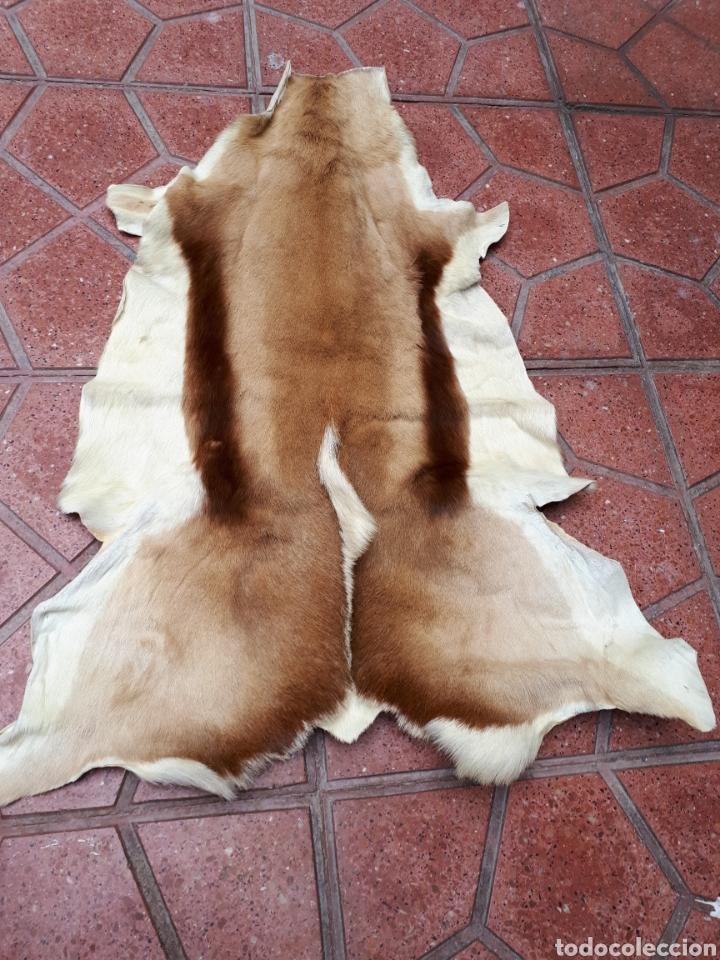 PIEL DE GACELA ALFOMBRAS (Antiques - Home and Decoration - Old Carpets)