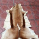 Antigüedades: PIEL DE GACELA ALFOMBRAS. Lote 160249205