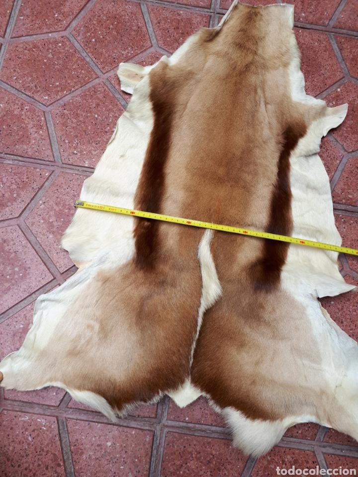 Antiques: Piel de gacela alfombras - Foto 4 - 160249205