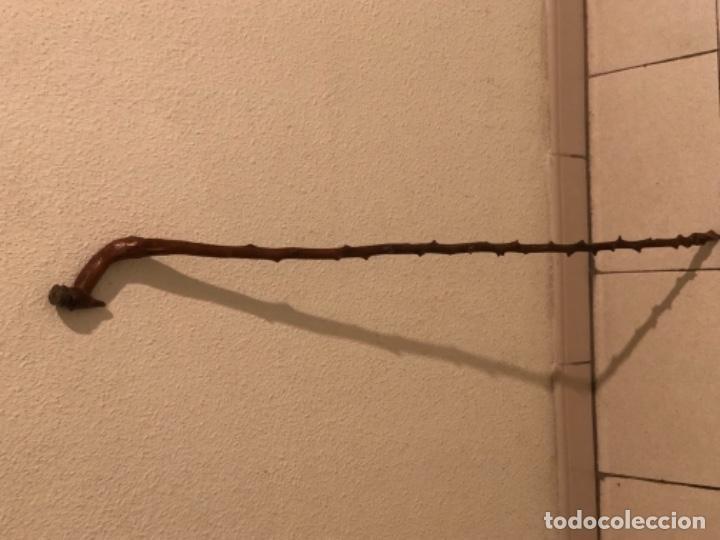 Antigüedades: Bastón madera de Espino - Foto 2 - 160676726