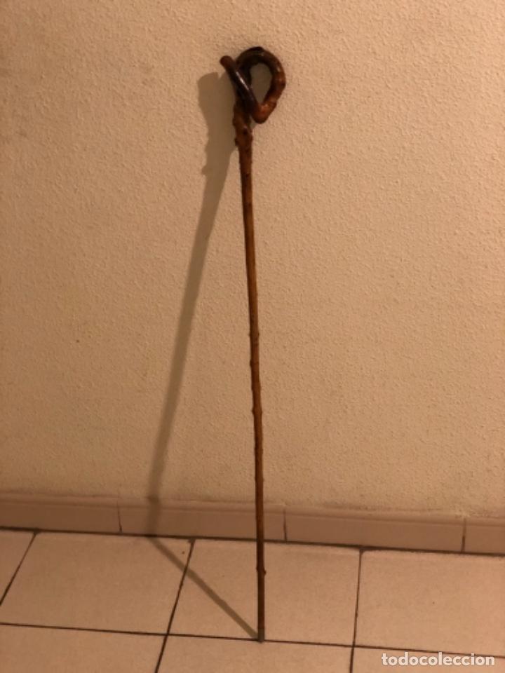 Antigüedades: Bastón madera de Espino - Foto 2 - 160677354