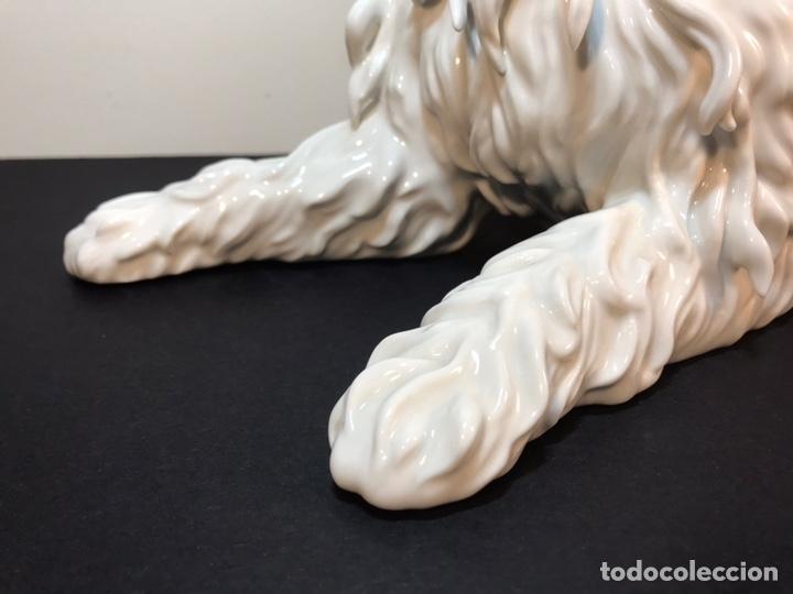 Antigüedades: Figura Porcelana- España- Algora- Perro Boloñés- 40x19x24 cm. - Foto 2 - 163490364