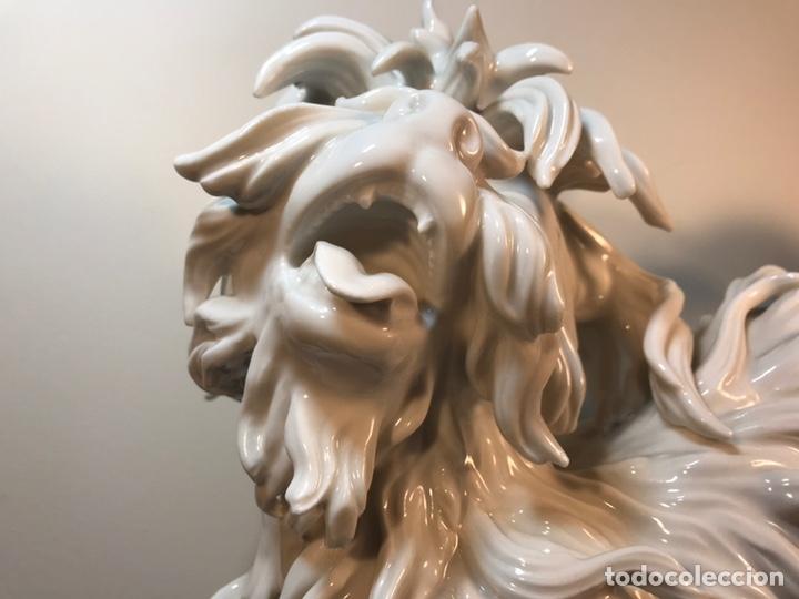 Antigüedades: Figura Porcelana- España- Algora- Perro Boloñés- 40x19x24 cm. - Foto 4 - 163490364