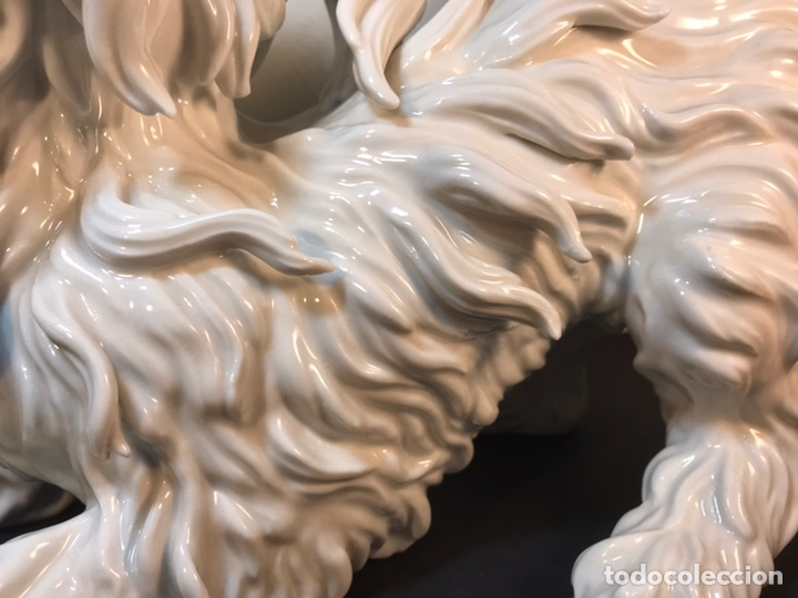Antigüedades: Figura Porcelana- España- Algora- Perro Boloñés- 40x19x24 cm. - Foto 6 - 163490364