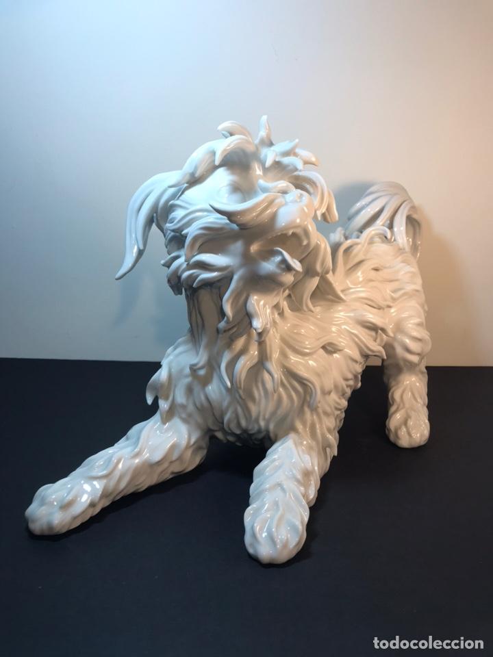 Antigüedades: Figura Porcelana- España- Algora- Perro Boloñés- 40x19x24 cm. - Foto 10 - 163490364