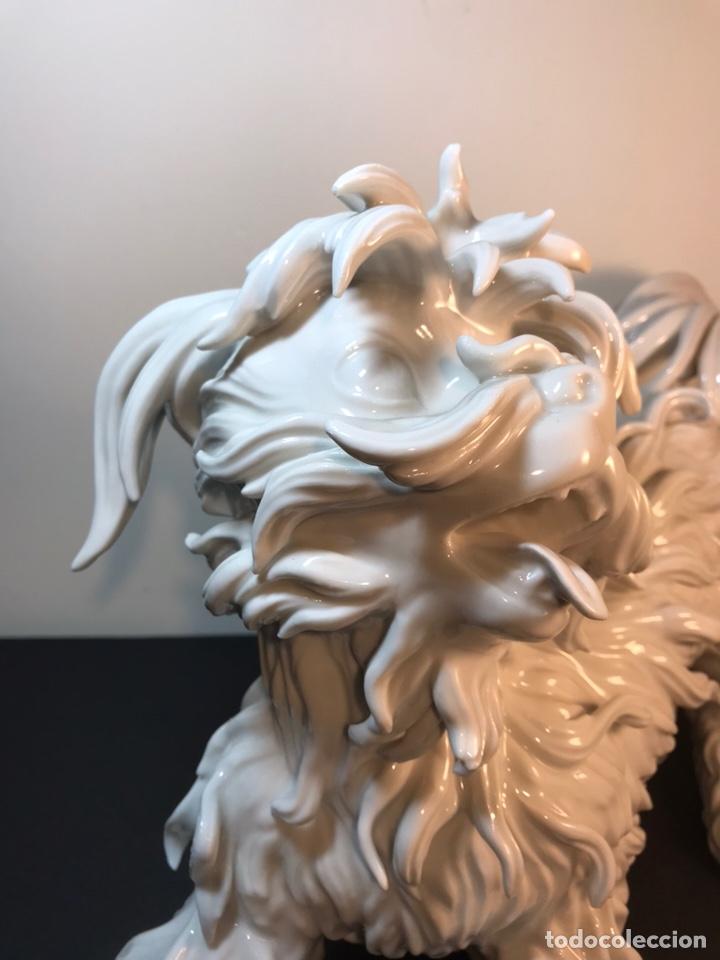 Antigüedades: Figura Porcelana- España- Algora- Perro Boloñés- 40x19x24 cm. - Foto 12 - 163490364