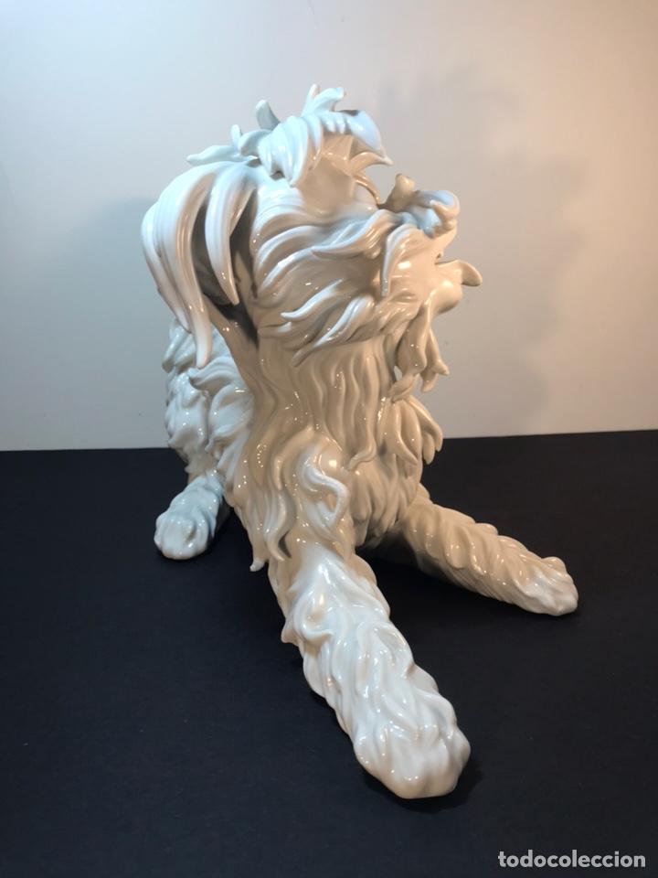 Antigüedades: Figura Porcelana- España- Algora- Perro Boloñés- 40x19x24 cm. - Foto 14 - 163490364