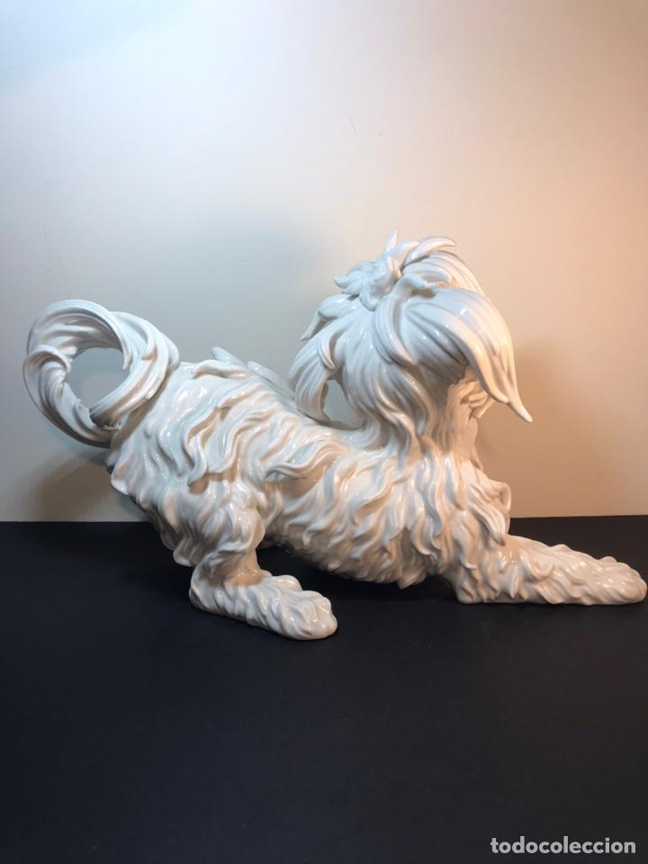 Antigüedades: Figura Porcelana- España- Algora- Perro Boloñés- 40x19x24 cm. - Foto 18 - 163490364