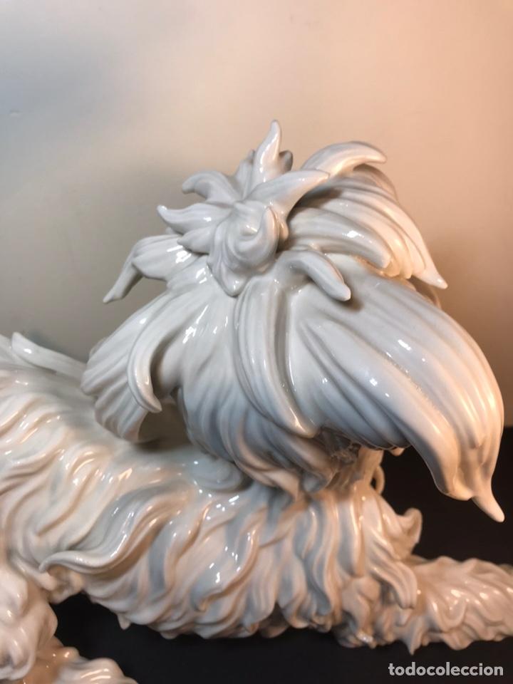 Antigüedades: Figura Porcelana- España- Algora- Perro Boloñés- 40x19x24 cm. - Foto 21 - 163490364