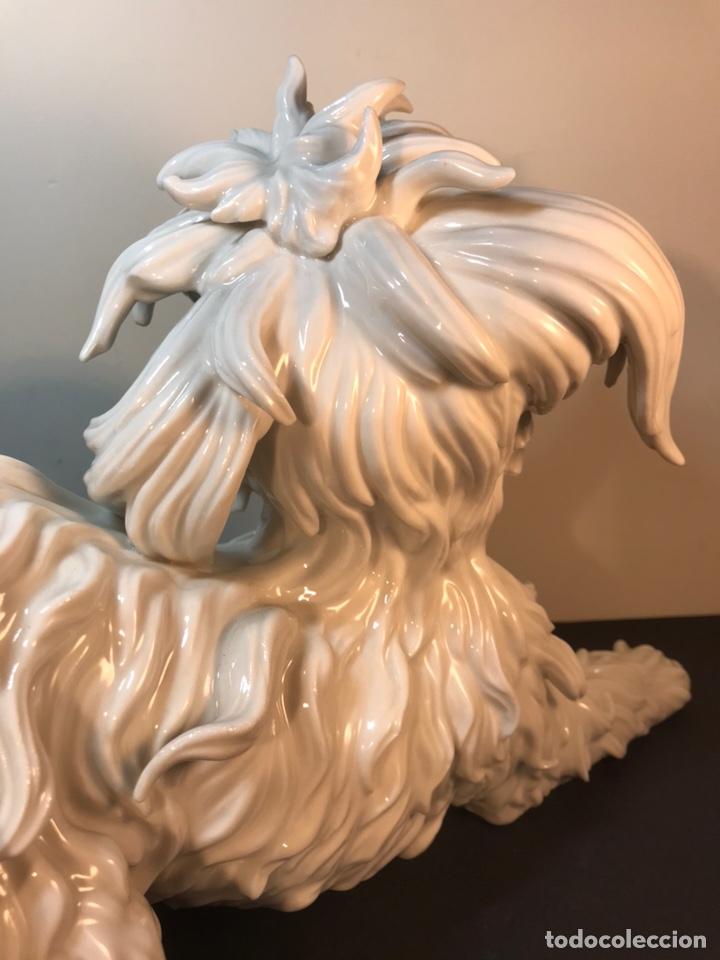 Antigüedades: Figura Porcelana- España- Algora- Perro Boloñés- 40x19x24 cm. - Foto 26 - 163490364