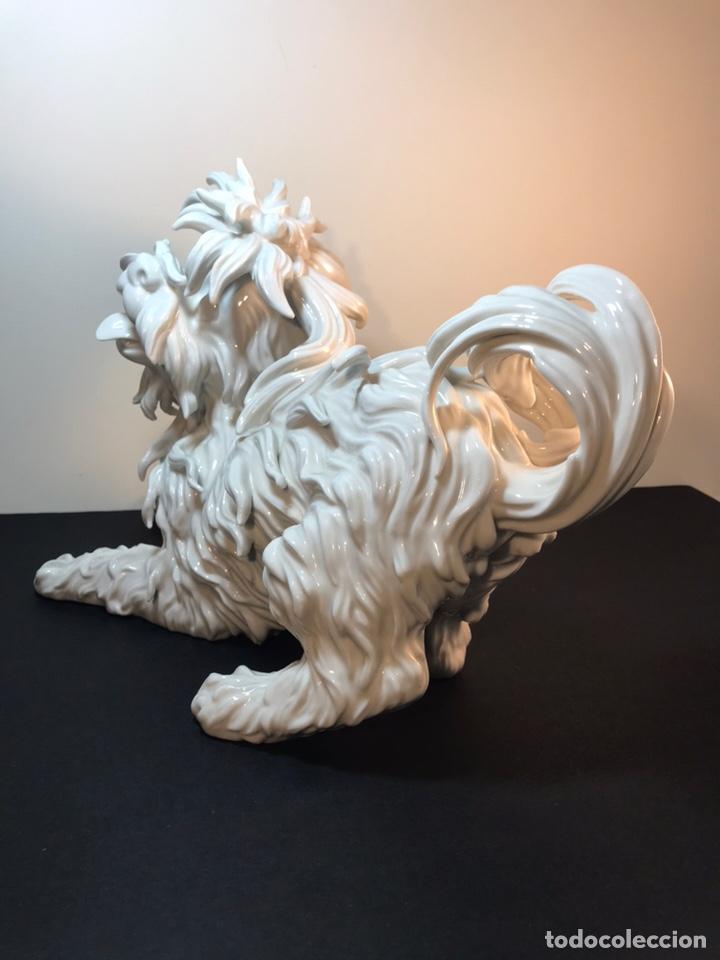 Antigüedades: Figura Porcelana- España- Algora- Perro Boloñés- 40x19x24 cm. - Foto 28 - 163490364