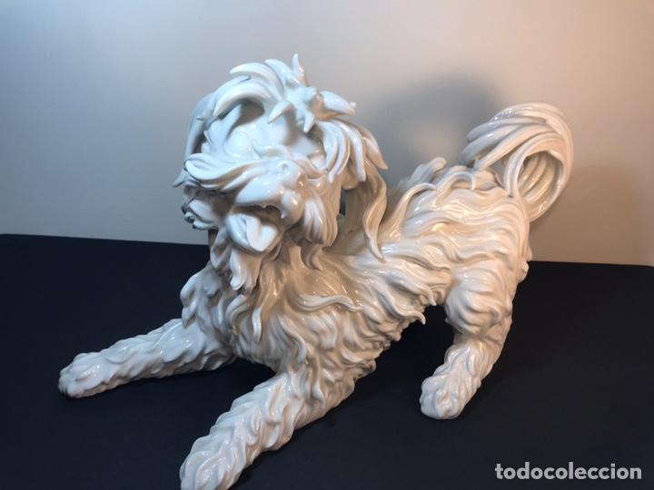 Antigüedades: Figura Porcelana- España- Algora- Perro Boloñés- 40x19x24 cm. - Foto 33 - 163490364