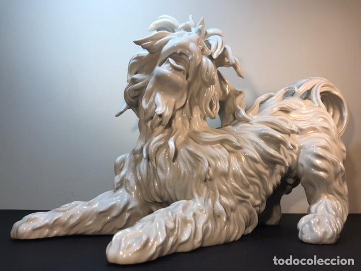 Antigüedades: Figura Porcelana- España- Algora- Perro Boloñés- 40x19x24 cm. - Foto 34 - 163490364