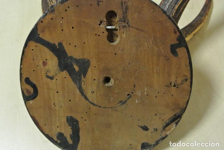 Antigüedades: TROFEO DE CAZA CORNAMENTA DE SEIS PUNTAS - Foto 6 - 164972958