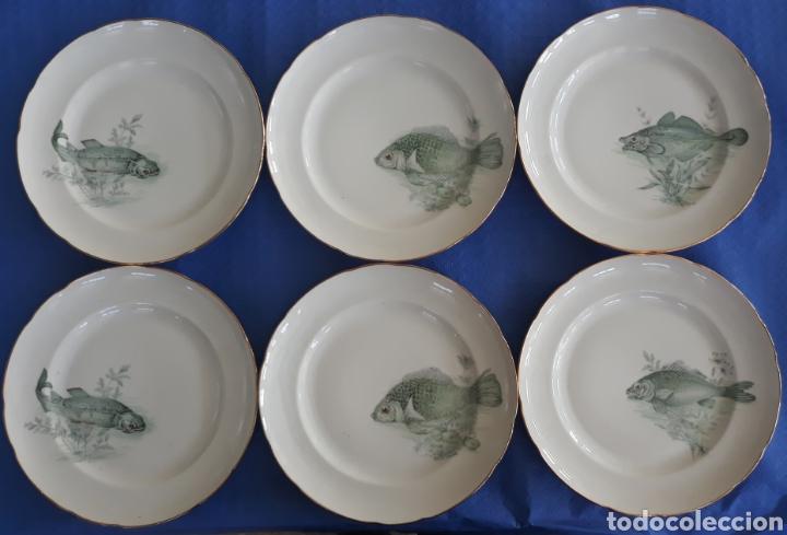 CONJUNTO PLATOS DECORADOS PECES MAH VIGO (Antigüedades - Porcelanas y Cerámicas - La Cartuja Pickman)