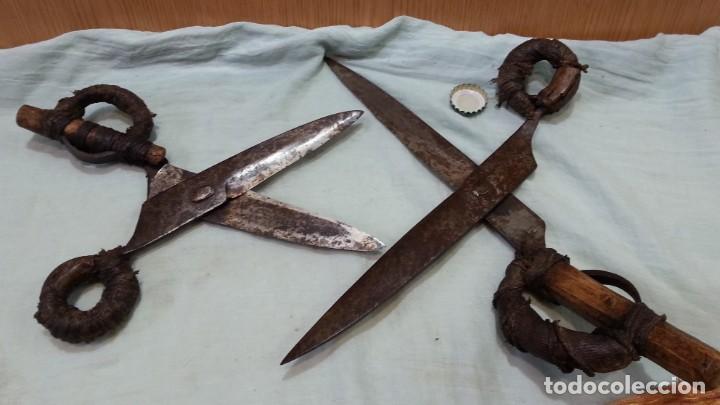 Antigüedades: Tijeras esquiladoras de ovejas. Pareja. Impresionantes herramientas antiguas. - Foto 4 - 166411058