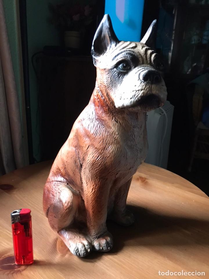 Antigüedades: Figura de perro Bóxer estuco y pintado a mano , antiguo - Foto 5 - 168178952