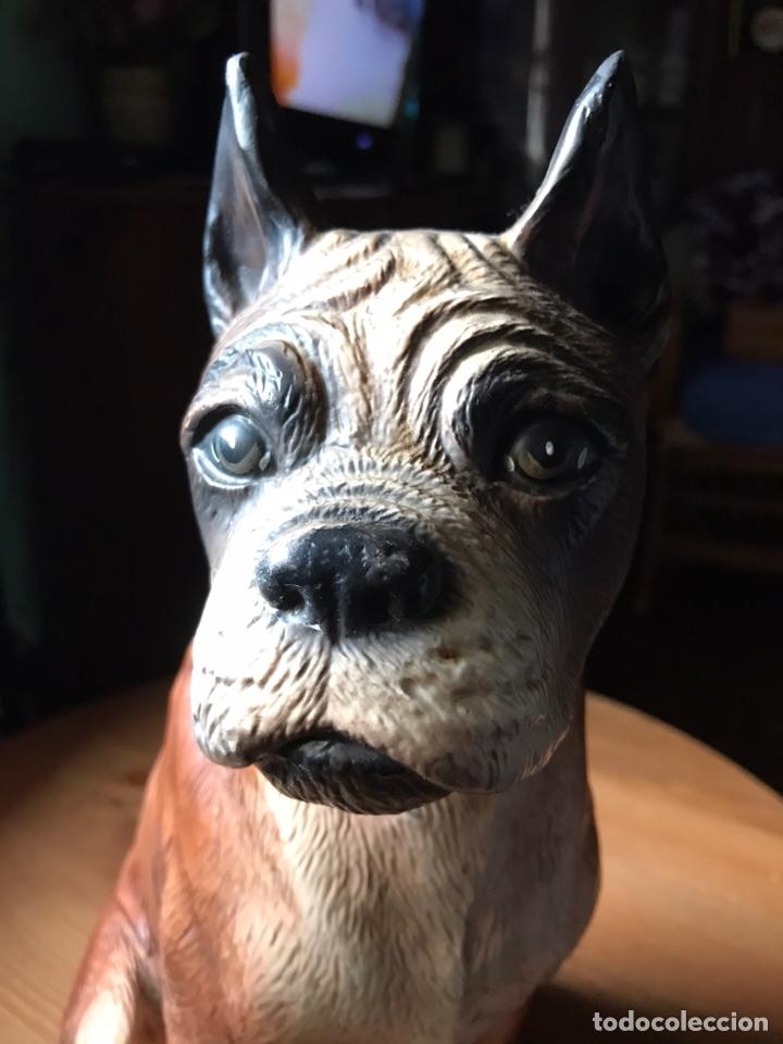 Antigüedades: Figura de perro Bóxer estuco y pintado a mano , antiguo - Foto 6 - 168178952