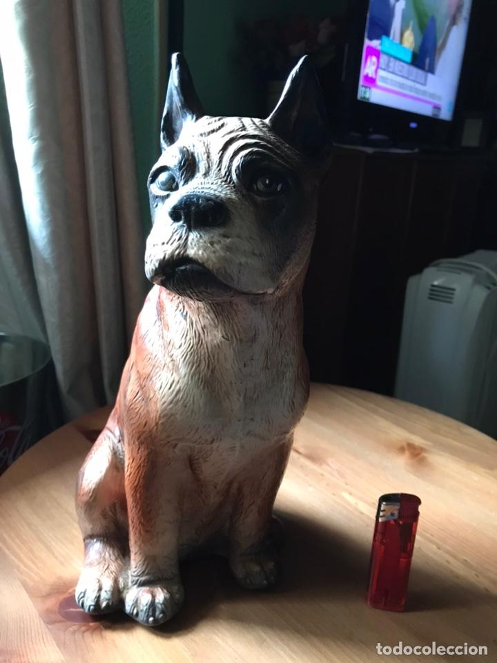 Antigüedades: Figura de perro Bóxer estuco y pintado a mano , antiguo - Foto 12 - 168178952