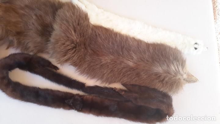 Antigüedades: Estolas antiguas de piel - Foto 23 - 169296776
