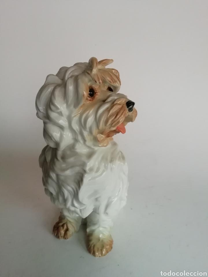 Antigüedades: Figura Porcelana Algora Perro 20 cm - Foto 2 - 169963088