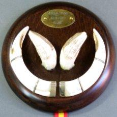 Antigüedades: TROFEO BRONCE DE COLMILLOS DE FACOCHERO CASTILLA LA MANCHA 2010. Lote 172070130