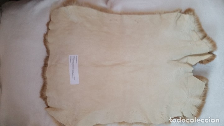 Antigüedades: EXPLENDIDA Alfombra de piel natural. Sin estrenar - Foto 4 - 173115117