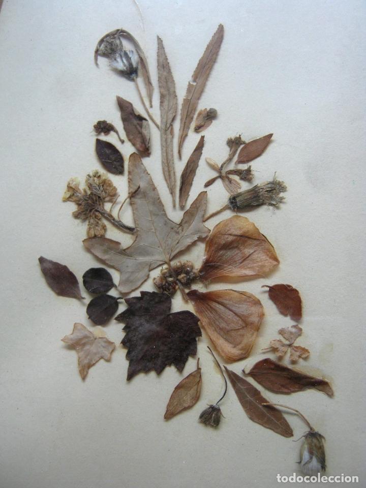 Antigüedades: bella pareja de marcos montados con pasportu y vidrio - collage hojas - Foto 3 - 174103013