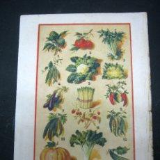 Antigüedades: C. 1920 ANTIGUA BELLA LAMINA PLANTAS HORTALIZAS - COCINA GASTRONOMÍA. Lote 175059998