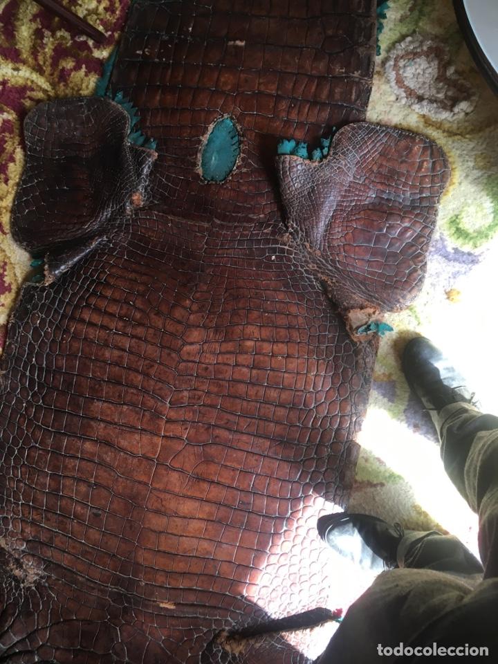Antigüedades: Alfombra cocodrilo caimán antigua - Foto 3 - 176649469