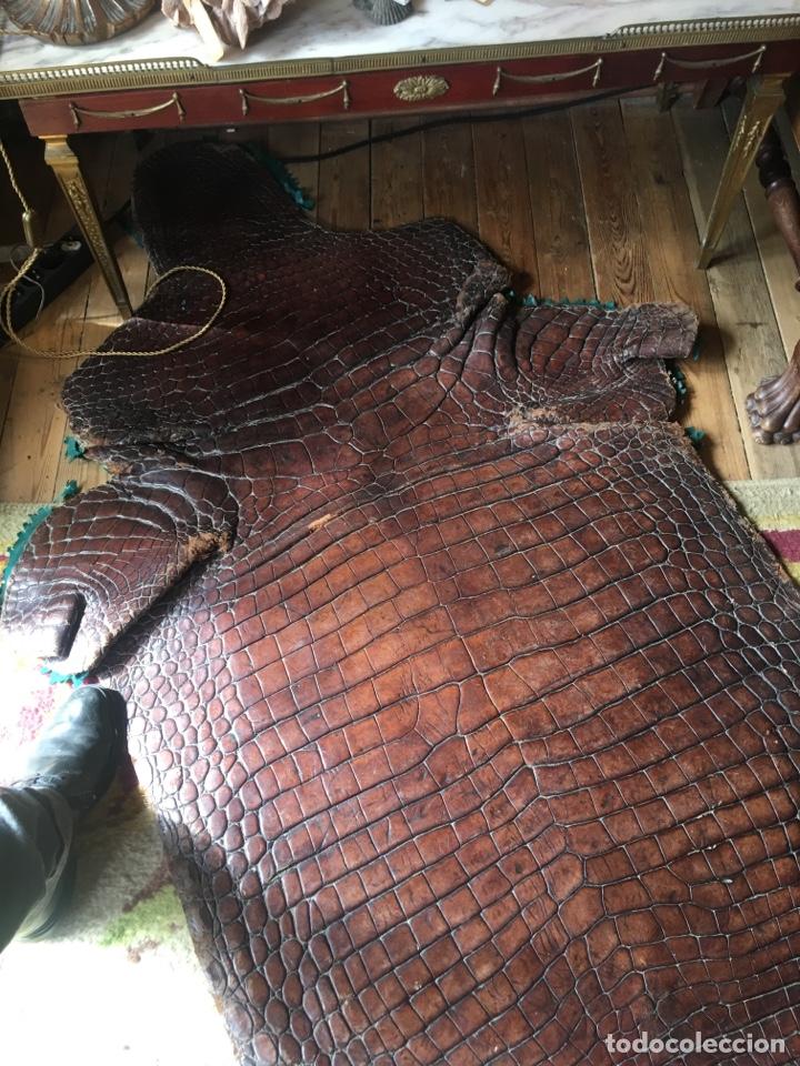 Antigüedades: Alfombra cocodrilo caimán antigua - Foto 4 - 176649469